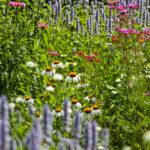 stauden staudenbeet gartengestaltung pflanzplanung beet