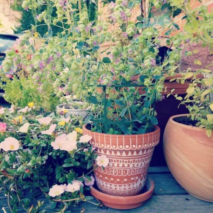 DIY Geschenke Gartenliebhaber