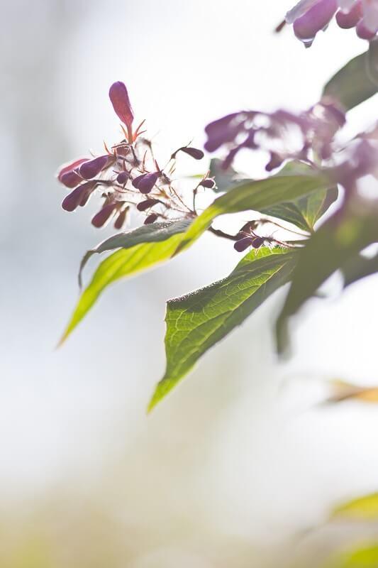Deine Wilden Straucher Schneiden Pflegetipps Wildes Gartenherz