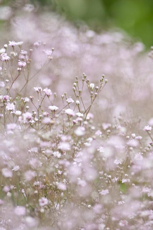 Blumen der Liebe