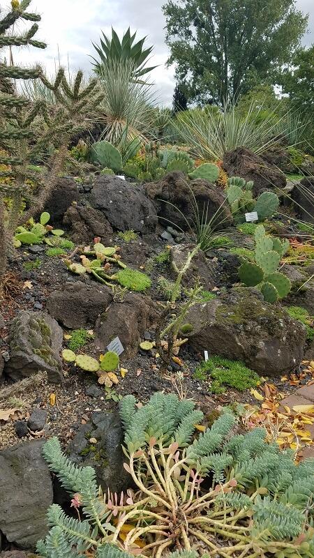 Botanischer Garten Kakteen