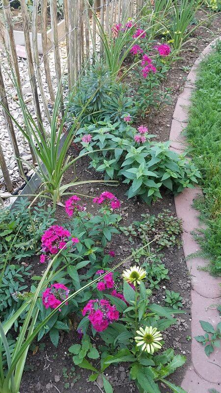 Staudenbeet beim Gemüse