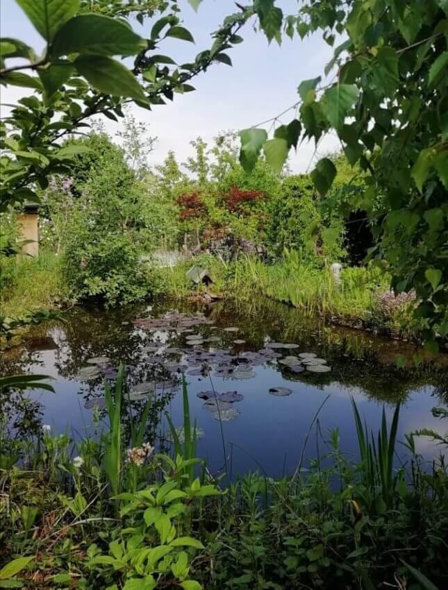 Marion - schönste Garten