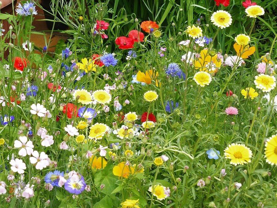 Schönste Gärten
