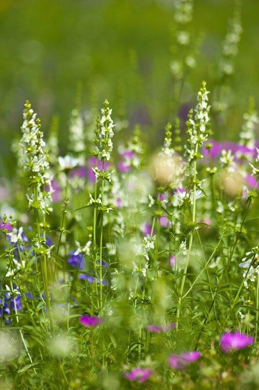 geheimen Garten und Pflanzpläne