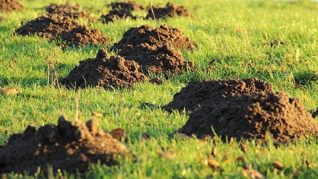 Boden verbessern Maulwurf