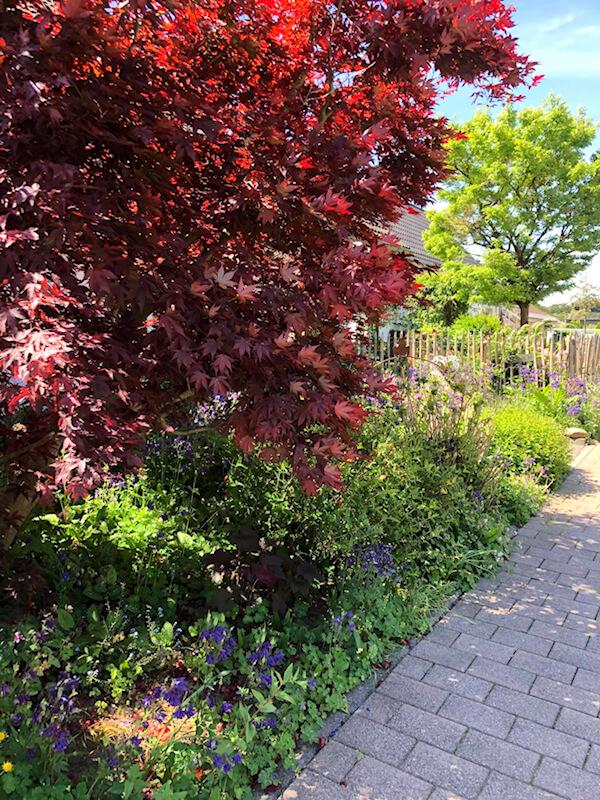 Vorgarten von Anna