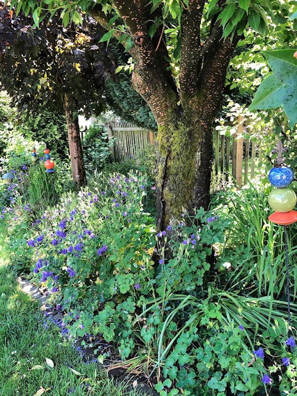 Der Vorgarten von Anna.