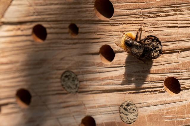 Wildbiene am Insektenhotel