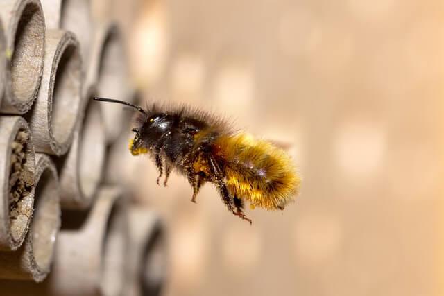 Wildbienenarten Insektenhotel